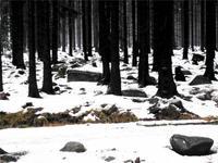 Verschneiter Brockenwald
