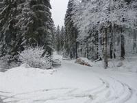 Blick in den frisch verschneiten Wald.