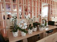 Orchideen in der Sonnenalm Kampenwand