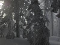 Verwunschener Brockenwald