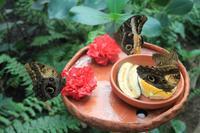 Schmetterlingshaus Jonsdorf - Futter für die Schmetterlinge