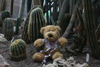 Autsch - hab mich auf ein Kaktus gesetzt