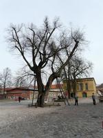 Hinter dem Baum: einzige erhaltene preußische Exerzierhalle!