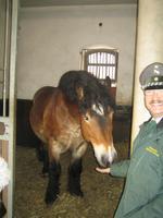 Kaltblüter und sein stolzer Pferdeflüsterer