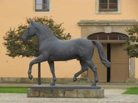 Elton im Landgestüt Moritzburg