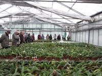 Im Orchideenzentrum Celle