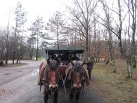 Kutschfahrt durch die LÜneburger Heide