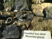 Fossilien in der Höhle