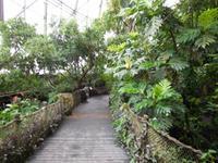 Regenwald in Randers