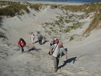 Eberhardt Wandergruppe in Dänemark - Dünenwanderung Henne Strand
