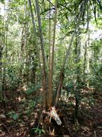 Wanderung im Cuyabeno Reservat