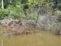 Fahrt auf den Fluss Cuyabeno