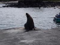 Insel Floreana: Seelöwe