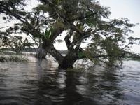 Cuyabeno-Reservat