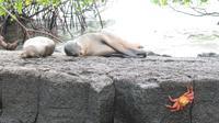 Galapagos - Floreana - Seelöwen