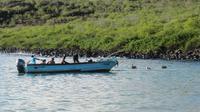 Galapagos - Santa Fee - Fischer
