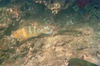 Unterwasserwelt vor Galápagos