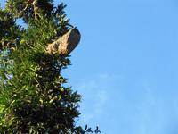Wespennest im Cuyabeno-Nationalpark
