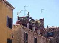 In Venedig - Dachbepflanzung