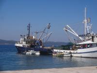 Fischerhafen in Zadar