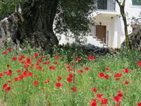 0117 Kreuzfahrt AIDAvita - Adria - Inselrundfahrt Korfu - Spaziergang durch Makrades