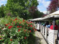 517 Kreuzfahrt AIDAvita - Adria -Besuch Park Sigurta