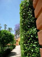 Sevilla Alcazar Gärten