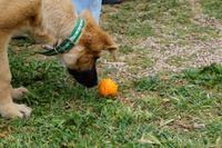 Auch Hunde mögen Zitrusfrüchte. Zumindest wenn sie auf einer Bio-Zitrus-Plantage aufwachsen