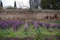 Zierkohl in der Alhambra
