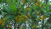 Inselrundfahrt Mallorca - Flora