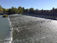 Wasservogelparadiese
