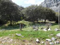 Sierra de Grazalema (41)