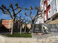 Ineinander verschlungene Platanen in Burgos