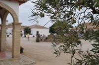 Weingut mit Oliven
