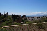 Weinstöcke in der Alhambra