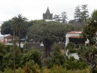 Teneriffa - Rundreise – Inselhüpfen auf den Kanaren - Icod de los Vinos