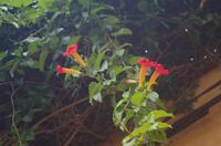 Schönheiten der Flora