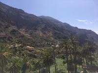 Palmental Valle Gran Rey