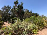 Besucherzentrum P.N. La Gomera Juego de Bolas und exotische Pflanzen