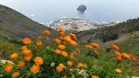 Inselhüpfen auf den Kanaren - Teneriffa - Garachico