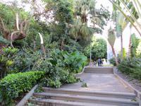 Schäden nach dem Unwetter im Botanischen Garten von Santa Cruz