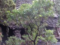 Insel Faial