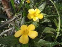 Rundreise Lanzarote, Fuerteventura – Naturpark Oasis Park
