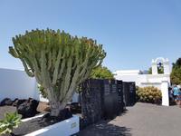 Rundreise – Inselhüpfen Lanzarote, Fuerteventura (114)