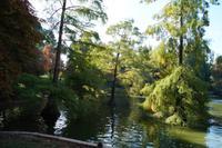 07-10-2016 Madrid, Chinazypressen im Parque de Buen Retiro