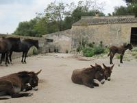 weitere Bewohner von Els Caldres
