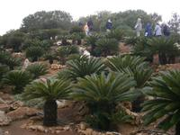 Palmenberg im Botanicactus