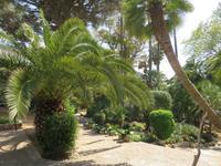 Arabische Gärten von Alfabia