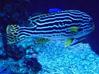 Palma Aquarium (7)