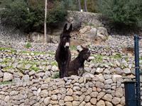 Tiere auf La Granja (2)